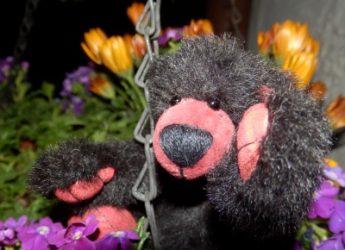 Flup, der Blumenfreund !