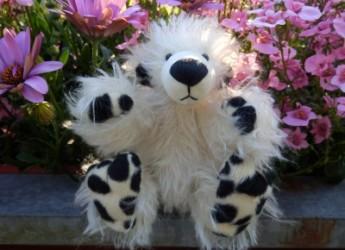 Shido, ein neuer Bär nach dem Scottyschnitt!
